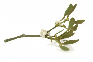mistletoe-300x200